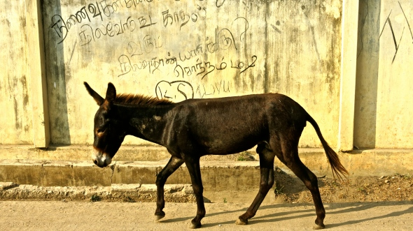 Even donkeys take part